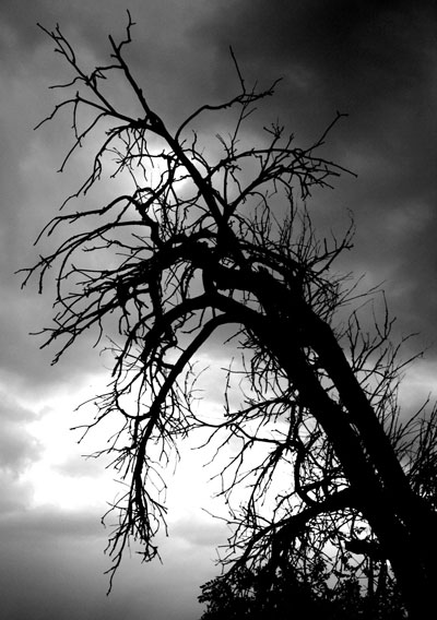 tree.01